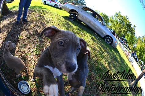 puppies (1)