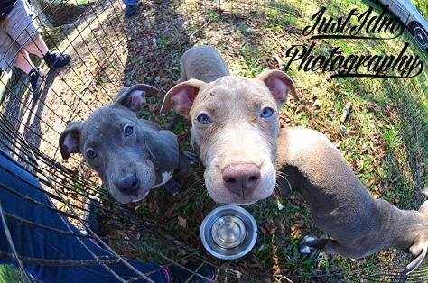 puppies (21)