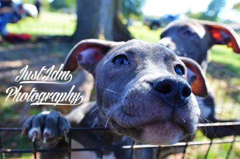 puppies (9)